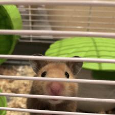 Фрилансер Ivan M. — Украина, Киев. Специализация — Локализация ПО, сайтов и игр, Разработка игр