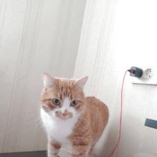 Freelancer Анастасия Голубицкая — HTML/CSS, JavaScript