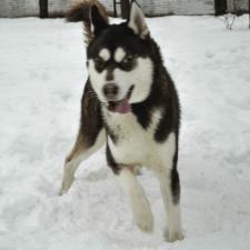 Freelancer Максим Д. — Ukraine, Odessa. Specialization — HTML/CSS, Web programming
