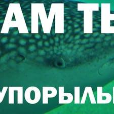 Егор А.