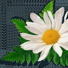 Фрилансер Руслана Т. — Украина, Тернополь. Специализация — Полиграфический дизайн, Копирайтинг
