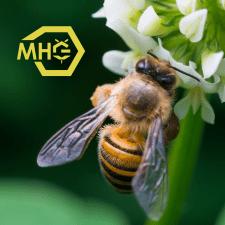 Логотип MHG