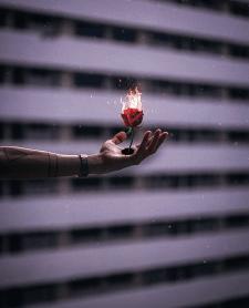 Горящая роза