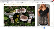 Мацутаке: грибной деликатес для королей