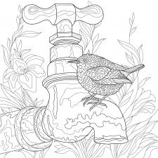 Раскраска птица