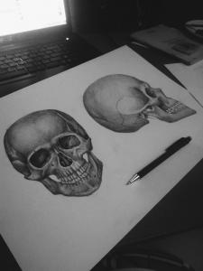 Чертеж по анатомии