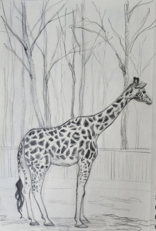 Зарисовка жирафы
