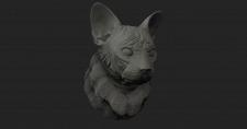 Cat | Котэ