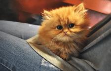 Просто котенок для поднятия настроения