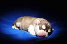 Фото животных для открыток