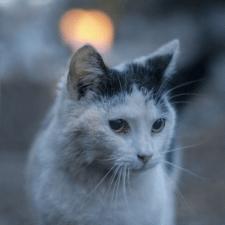 Обработка фотографий с котом, убирал руку с фото