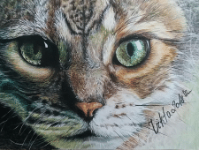 Кот или философия жизни