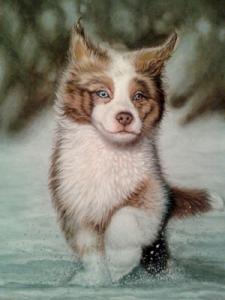 Собака, бегущая по снегу