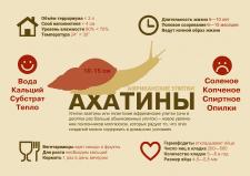 инфографика ахатины
