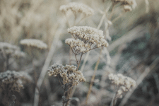 Съемка и цветокор