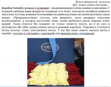 Описание роз в коробках