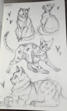 Скетч «коты»