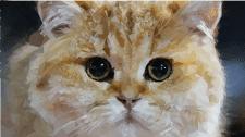 poligon cat