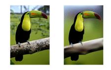 Рисунок с фотографии в векторе