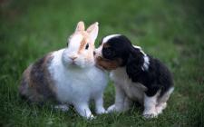 Чем нельзя кормить домашних кроликов