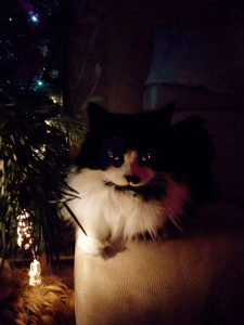 Обработка новогодней фотографии кошки