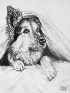 портрет собаки графічним олівцем