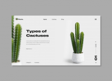 Types of cactuses