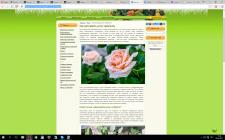 Как рассадить розу черенком