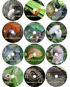 Дизайн брендированных дисков