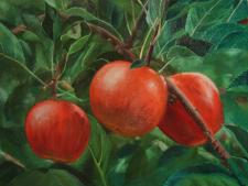 Яблоки_картина маслом