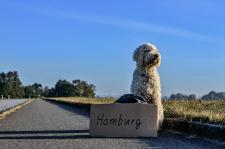 Как перевозить животных через границу