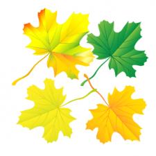 листья вектор