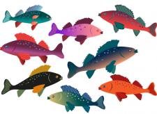 рыбы для микростоков