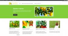 Сайт по продаже комнатных лимонов