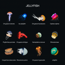 медузы вектор