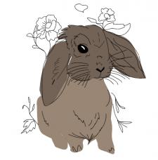 заяц красивый