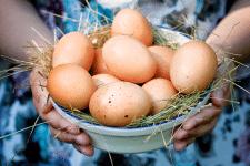 Питательные яйца - выбираем самые свежие