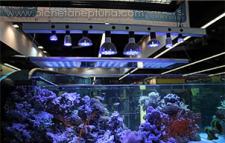 LED-светильники в освещении аквариумов....