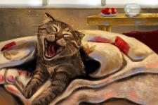 Котик закутан в одеяло