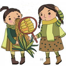 з проекту кукурудза