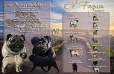 Презентация помета для питомника собак