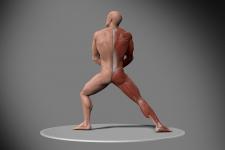 Anatomy Study (2/2)