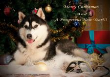 Фото животных обработка для открыток