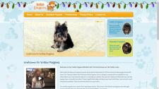 Настройка КР для сайта по продаже щенков