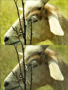 Обработка фото (природа Молдовы)