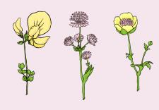 Векторні квіти