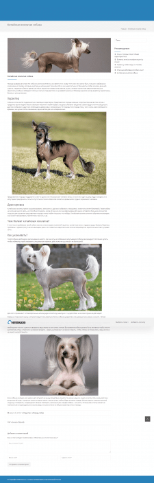 Китайская хохлатая собака - статья
