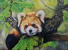 червона панда картина маслом