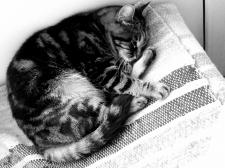 Обработка фото кошки