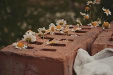 Цветы в мягких тонах